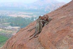 Os macacos dormem no amanhecer na montanha Hampi, Índia Foto de Stock