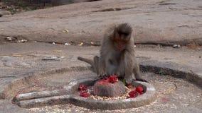 Os macacos encontram o por do sol vídeos de arquivo