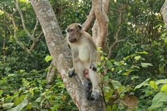 Os macacos sentam-se e comendo na floresta imagens de stock royalty free