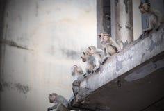 Os macacos sentam-se na construção no downtawn de Lopburi, Fotografia de Stock