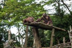 Os macacos sentam-se no jardim zoológico Fotos de Stock