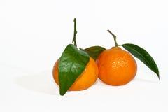 Os mandarino Foto de Stock