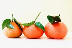 Os mandarino alaranjados bonitos Foto de Stock