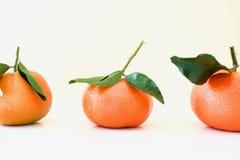 Os mandarino alaranjados bonitos Imagens de Stock Royalty Free