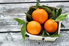 Os mandarino frescos das tangerinas em uma cesta de vime Imagem de Stock