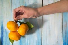 Os mandarino na mão fêmea na frente do placas azuis brilhantes Imagens de Stock Royalty Free