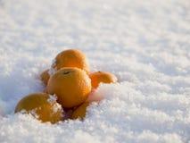Os mandarino na neve Fotos de Stock