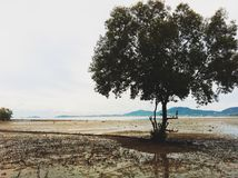 Os manguezais Foto de Stock