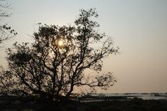 Os manguezais reflorestam Fotografia de Stock Royalty Free