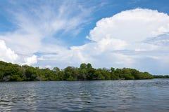 Os manguezais reflorestam Fotos de Stock
