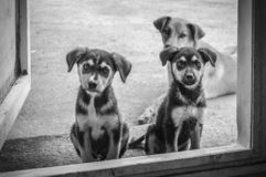 Os melhores cães do amigo-três fotografia de stock