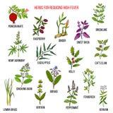 Os melhores remédios ervais para reduzir a febre alta ilustração stock