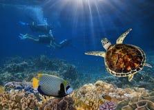 Os mergulhadores de mergulhador exploram um recife de corais Fotografia de Stock Royalty Free