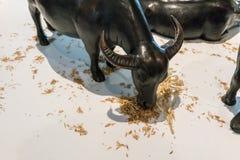Os modelos do búfalo estão comendo o vidro secado no branco imagens de stock royalty free