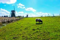 Os moinhos de Kinderdijk - Países Baixos Foto de Stock Royalty Free