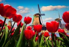 Os moinhos de vento holandeses famosos Imagem de Stock