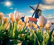 Os moinhos de vento holandeses famosos Fotografia de Stock