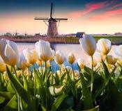 Os moinhos de vento holandeses famosos Foto de Stock
