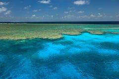 Os moluscos radiantes jardinam grande recife de barreira fotos de stock royalty free