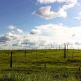 Os montes com as árvores carbonizadas Imagem de Stock