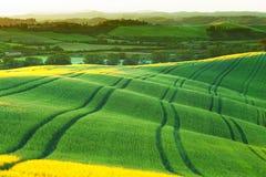 Os montes ondulados verdes brilharam com um sol de aumentação Fotografia de Stock Royalty Free