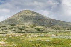 Os montes são cobertos com o musgo amarelo, Noruega fotos de stock royalty free