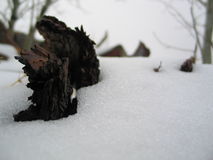 Os mortos de inverno fotos de stock
