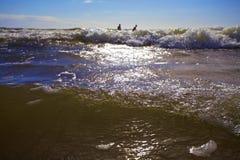 Os nadadores apreciam as ondas do mar Imagens de Stock Royalty Free