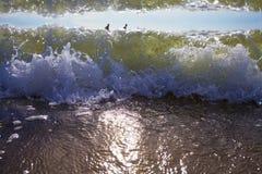 Os nadadores apreciam as ondas do mar Fotos de Stock