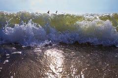 Os nadadores apreciam as ondas do mar Imagem de Stock