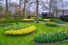 Os narcisos amarelos amarelos e brancos em Keukenhof estacionam, Lisse, Holanda, Países Baixos Fotos de Stock