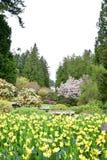 Os narcisos amarelos colocam na flor na mola fotos de stock royalty free