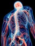 Os nervos humanos ilustração royalty free