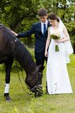 Os noivos estão estando no parque perto do cavalo, caminhada do casamento Vestido branco, par feliz com um animal Fundo verde Imagem de Stock