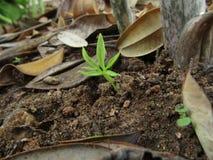 Os olhares crescentes da planta querem saber completamente fotografia de stock