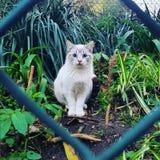 Os olhos azuis exóticos bonitos felinos do gato prendem plantas foto de stock royalty free