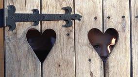 Os olhos bonitos da criança olham através do furo dado forma coração na cerca de madeira rústica filme