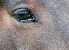 Os olhos tristes Foto de Stock Royalty Free