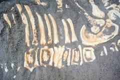 Os ossos de dinossauro permanecem Imagem de Stock Royalty Free