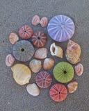 Os ouriços-do-mar e os shell coloridos na areia molhada encalham Fotografia de Stock
