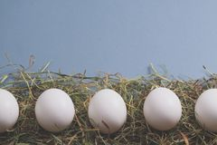 Os ovos brancos estão colocando na fileira no feno Fotos de Stock Royalty Free