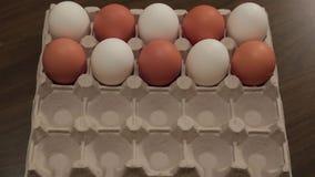 Os ovos brancos na pilha da caixa transformam um por um em ovos marrons animation vídeos de arquivo