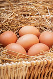 Os ovos colocados com feno Fotos de Stock