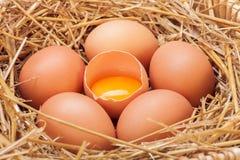 Os ovos colocados com feno Imagem de Stock