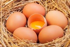 Os ovos colocados com feno Imagens de Stock Royalty Free