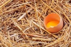 Os ovos colocados com feno Foto de Stock