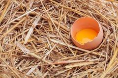 Os ovos colocados com feno Foto de Stock Royalty Free