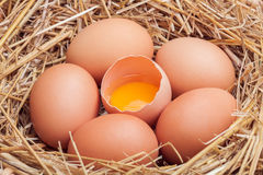 Os ovos colocados com feno Fotos de Stock Royalty Free