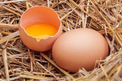 Os ovos colocados com feno Imagens de Stock