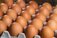 Os ovos da galinha encontram-se em uma carcaça para ovos fotos de stock royalty free